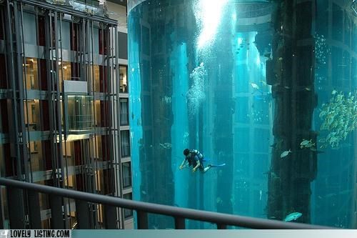 Radisson Hotel in Berlin, the elevator is surrounded by a giant fish tank. It's cleaned daily by professional divers
