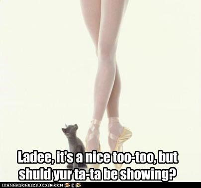 asking,ballerina,ballet,caption,captioned,cat,dancer,innuendo,lady,nice,observation,observing,question,showing,ta-ta,tutu