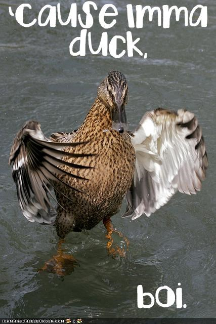 animals,back off,duck,gangsta,gangster,step off