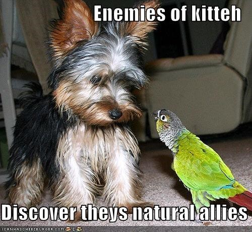 Enemies of kitteh  Discover theys natural allies