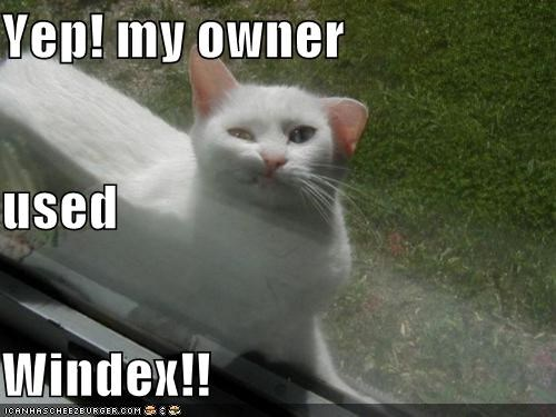 Yep! my owner  used  Windex!!