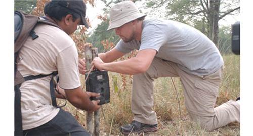 Leonardo DiCaprio Saves Elephants of the Day