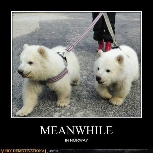 cubs,hilarious,Meanwhile,Norway,polar bear