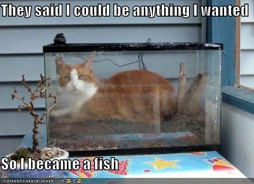 They said I could be anything I wanted  So I became a fish