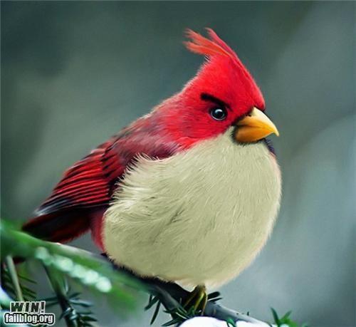 angry birds,animals,bird,Hall of Fame,iphone,nerdgasm,photography