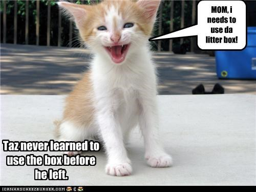 MOM, i needs to use da litter box!