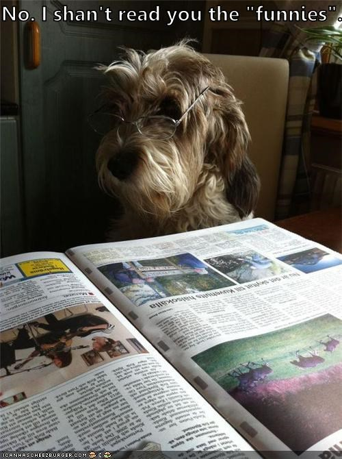 comic,comics,funnies,glasses,i-wont-do-it,newspaper,no,read,reading,terrier,whatbreed