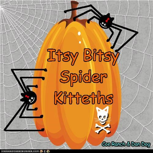 Itsy Bitsy Spider Kittehs....