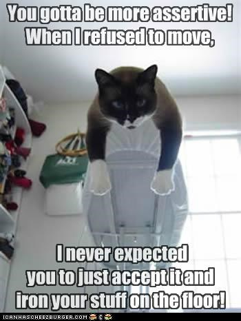 assertive,be,caption,captioned,cat,disappointed,floor,iron,ironing board,more,move,problem,refusal,refused,solution,suggestion