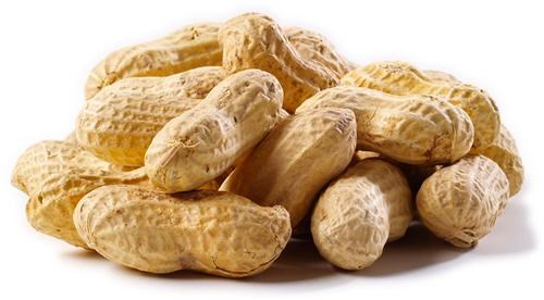 Peanut Allergy Breakthrough of the Day