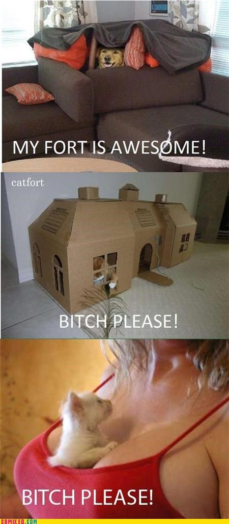 bouncy,Catfort,dogfort,fort,girls,ladybags,sistah,the internets