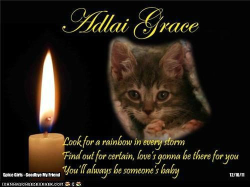 A Special Candle For Adlai Grace, Who Passed Away Today