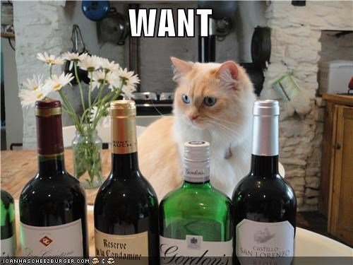 alcohol,caption,captioned,cat,do want,want