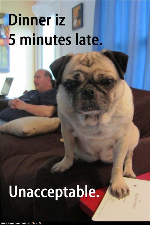 dinner,food,late,noms,pug,unacceptable