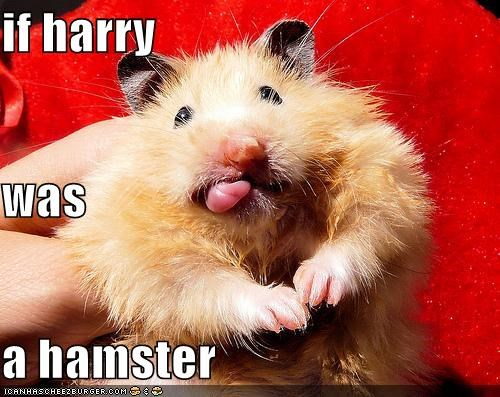 if harry was a hamster