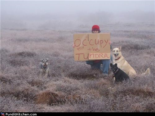 Occupy the Vacancy