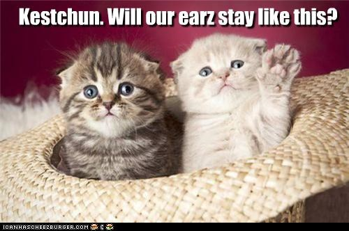 Kestchun. Will our earz stay like this?