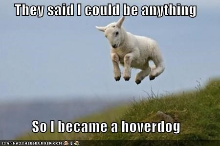 They said I could be anything  So I became a hoverdog