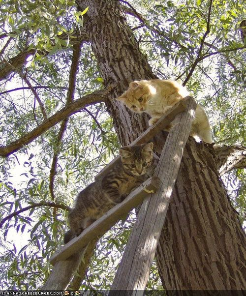 cant-get-down,cyoot kitteh of teh day,ladders,stuck,trees,two cats,uh oh