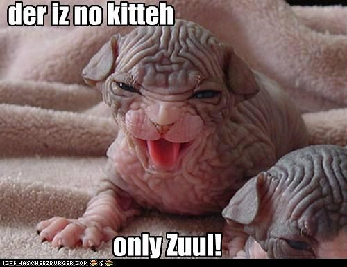 Aww c'mon Zuulie, I jus wanna talk to the kitty...