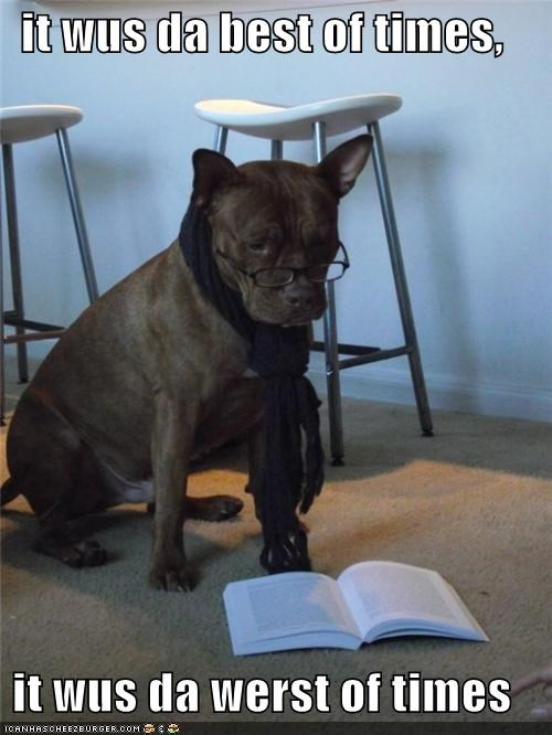 charles dickens,glasses,hipster,pit bull,pitbull,reading,scarf