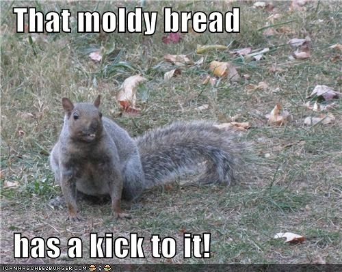 That moldy bread    has a kick to it!