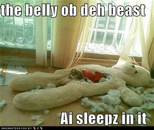 the belly ob teh best  Ai sleepz in it