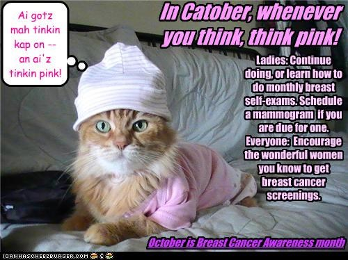 Felicity-kitteh is thinking pink; shouldn't you, too?