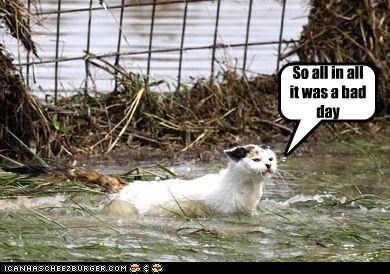 all in all,bad,caption,captioned,cat,day,do not want,flood,so,swimming,wet