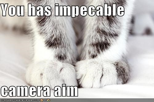 aim,camera,caption,captioned,cat,feet,impeccable,Photo,sarcasm