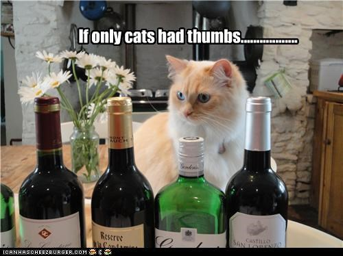 If only cats had thumbs..................