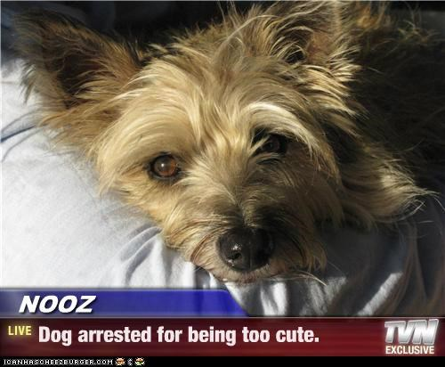 NOOZ - Dog arrested for being too cute.