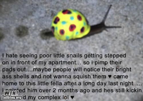 Snail Safety WIN