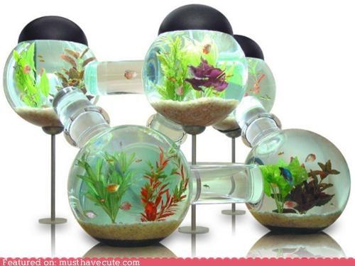 fish,Fishbowl,habitrail,pet,tubes
