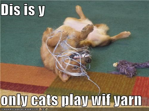 Dis is y  only cats play wif yarn