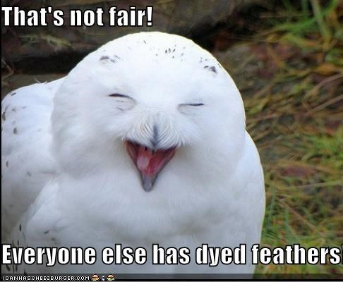 animals,complaining,dyed feathers,dyed hair,Owl,unfair