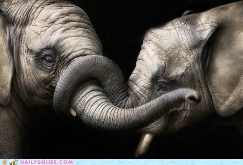 Elephantine Embrace