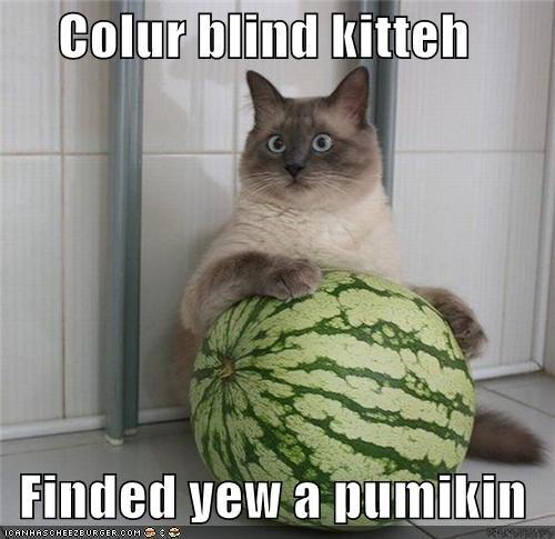 Colur blind kitteh