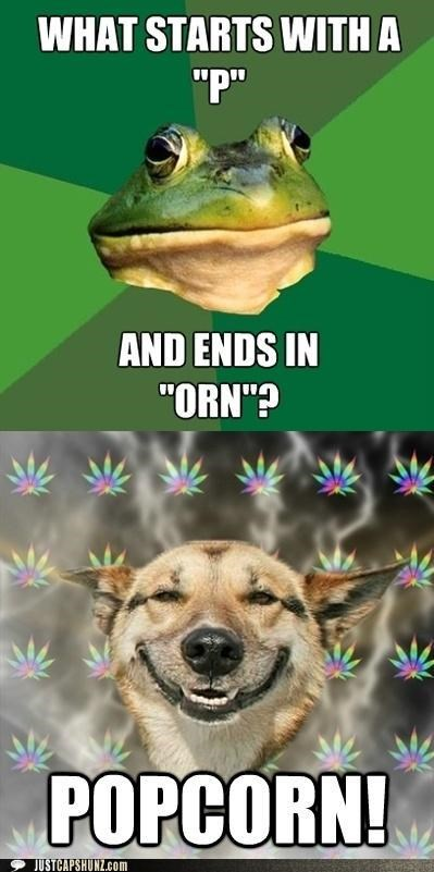 bachelor frog,food,Good Times,high,meme,Memes,munchies,noms,Popcorn,stoned,stoned dog,when memes collide,wordplay