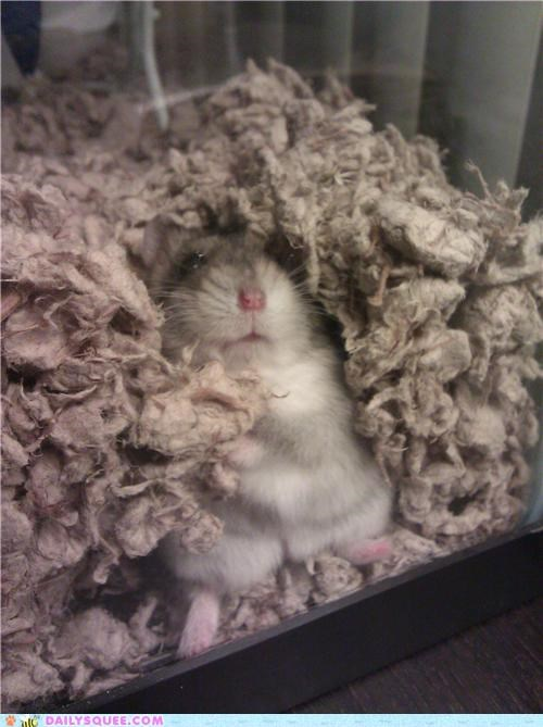 baby,difference,dwarf hamster,fat,fatness,glass,Hall of Fame,hamster,pressed,pudge,reader squees,wall