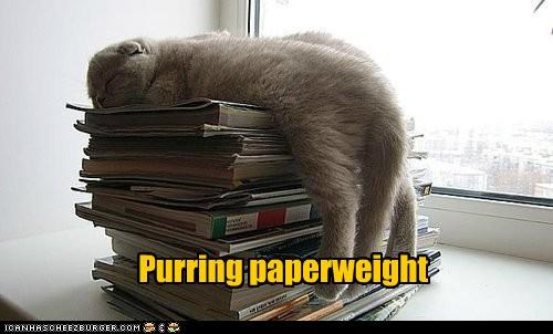 Purring paperweight