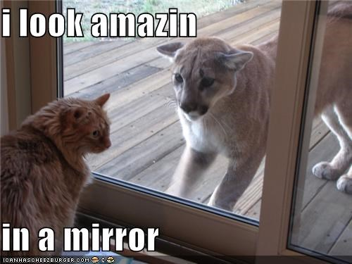 amazing,caption,captioned,cat,Hall of Fame,I,in,look,mirror,mountain lion,reflection