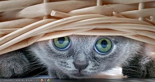 basket,baskets,cyoot kitteh of teh day,eyes,hiding,peeking