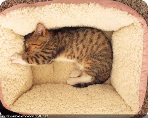 beds,cat bed,cyoot kitteh of teh day,kneading,sleeping,stretched out,wool