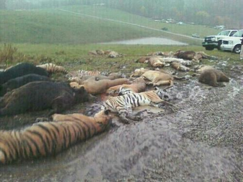 Follow Up of the Day: Sad End For Zanesville's Wild Animals