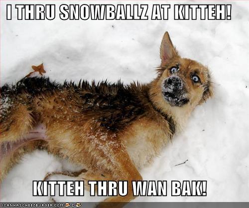 I THRU SNOWBALLZ AT KITTEH!  KITTEH THRU WAN BAK!