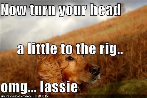Now turn your head  a little to the rig.. omg... lassie