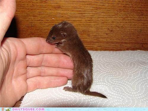 Squee Spree: Weasel Wave