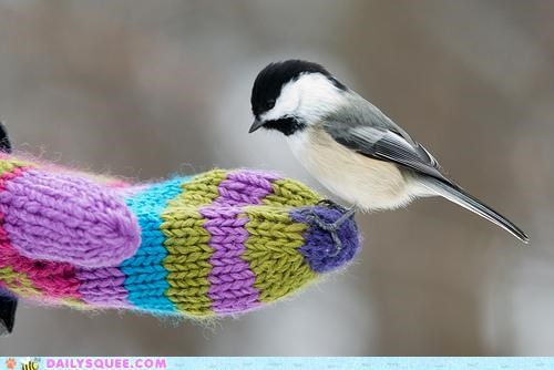 Chickadee Winter Day