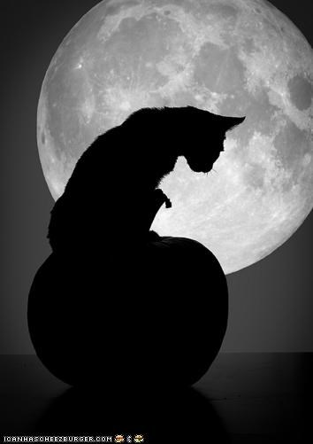best of the week,cyoot kitteh of teh day,halloween,meowloween,moon,pumpkins,shadows,silhouette